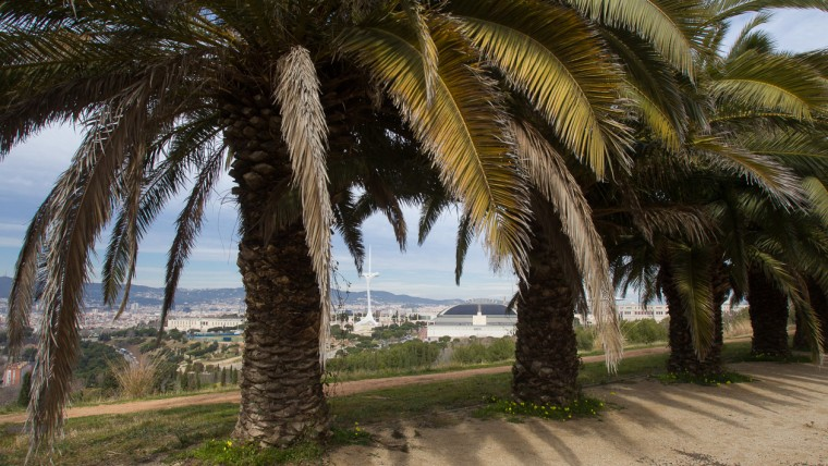 Things to do in Barcelona - Discover Montjuic
